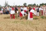aratoverseny2012090