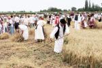 aratoverseny2012102